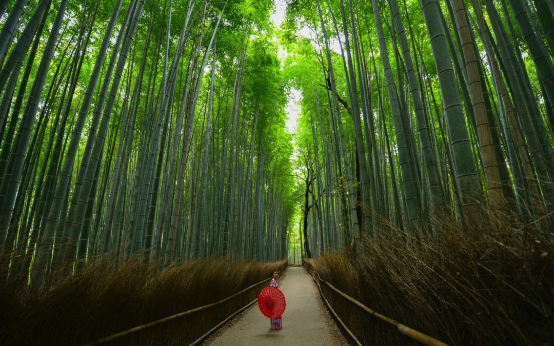 My Adjustment into Japanese Culture: A Teacher's Experience